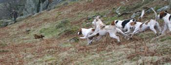 Fox Hunting images by Lakeland Photographer Neil Salisbury