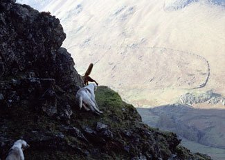 Fox Hunting in Lake District - Hunting photography