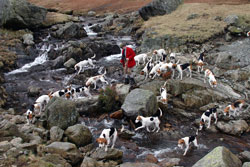 Hunting with Hounds - Lake District - Coniston