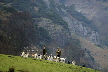 Hounds near Coniston Lake District by Betty Fold Gallery