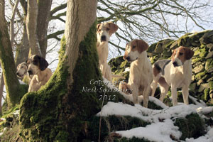 Foxhunting Photography by Neil Salisbury Hawkshead