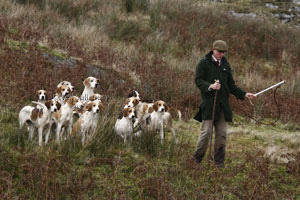 Teme Valley Foxhounds photography by Betty Fold Gallery