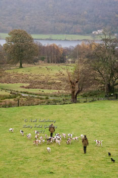 Foxhounds at Coniston by Betty Fold Gallery