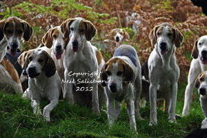 Foxhound Photography by Betty Fold Gallery of Hawkshead Cumbria