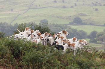Foxhound photographs by Hunting Photographer Neil Salisbury
