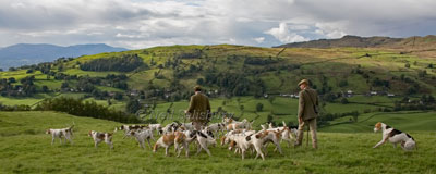 Foxhounds in Troutbeck by Betty Fold Gallery