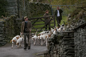 Hounds in Langdale by Betty Fold Gallery