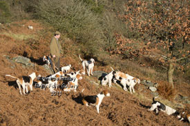 Coniston Foxhounds pictures by Betty Fold Gallery