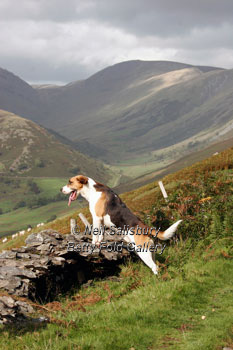 Lakeland Hunting Photography by Betty Fold Gallery