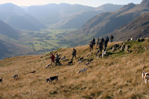 Hounds above Langdale