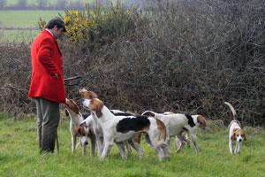 hounds by Neil Salisbury