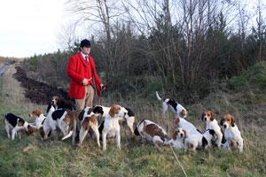 Coniston Foxhounds by Neil Salisbury
