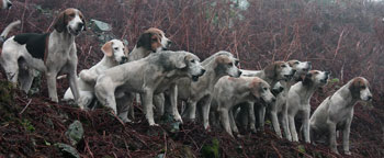 Lakeland Photographs Fox Hunting by Betty Fold Gallery