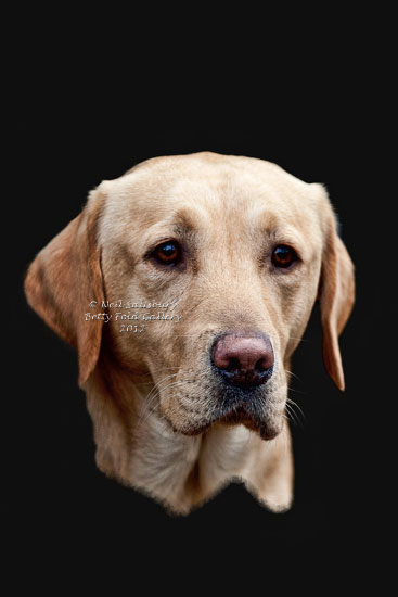 Digital Art images of gundogs by Betty Fold Gallery