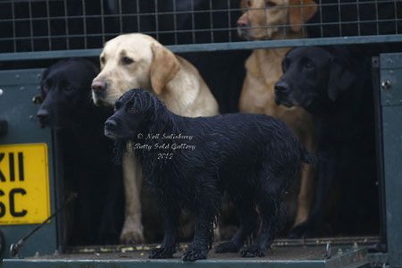 Gundog photography by Betty Fold Gallery Hawkshead Hill Cumbria