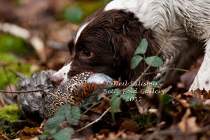 Gundog Photographs by Betty Fold Gallery