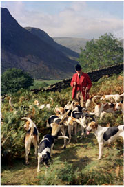 Hunting image of Lake District by Neil Salisbury