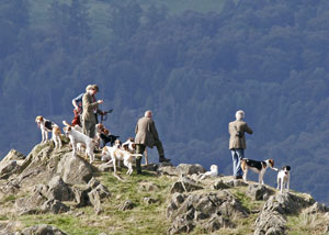 Coniston Foxhounds Images of Lakeland by Betty Fold Gallery