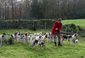 Fell Foxhounds by Neil Salisbury
