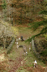 Lake District fox hounds by Betty Fold Gallery