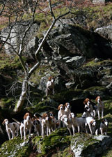 Fox Hounds photography by Betty Fold Gallery