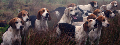 Fell Foxhounds marking by Neil Salisbury