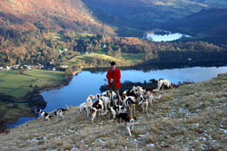 Foxhounds above Grasmere by Betty Fold Gallery