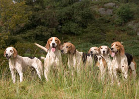 Lakeland hunting picture by Neil Salisbury