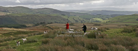 Hunting in Kentmere by Betty Fold Gallery