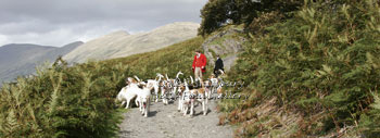 Foxhounds in the Lake District by Betty Fold Gallery