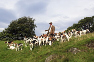 Coniston Foxhound prints by Betty Fold Gallery