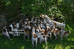 Foxhound Images by Betty Fold Gallery of Hawkshead Hill Cumbria