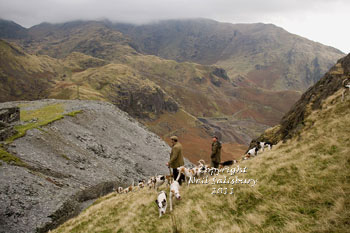 Coniston Foxhounds Images by Betty Fold Gallery