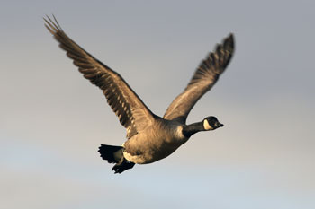Wild Fowl photography by Betty Fold Gallery