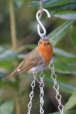 Robin on chain