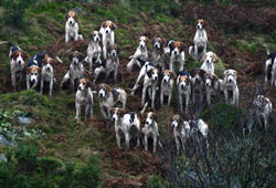 Fox Hunting- - Foxhounds Lakedistrict, Photography by Betty Fold Gallery