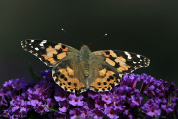 Butterfly photography by Betty Fold Gallery