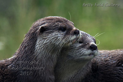 Wildlife photography by Betty Fold Gallery in Cumbria