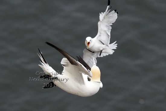 Seabird photography by Betty Fold Gallery